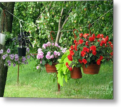 Begonias On Line Metal Print