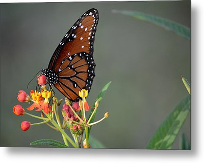 Behold The Queen Metal Print by Judy Wanamaker