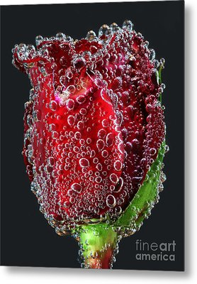 Metal Print featuring the photograph Bejeweled Rose by ELDavis Photography