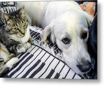 Bella And Peroni Metal Print by Photographic Art by Russel Ray Photos