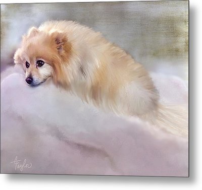 Bella Boo Metal Print by Colleen Taylor