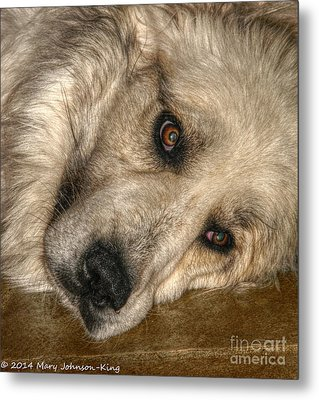 Bella Great Pyrenees Metal Print