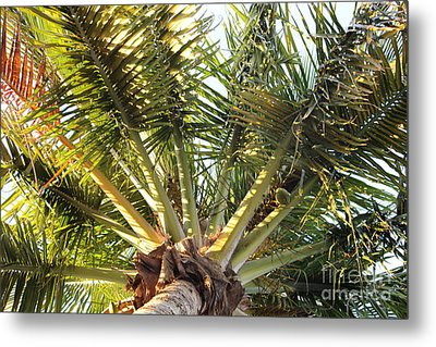 Below A Palm Tree Metal Print