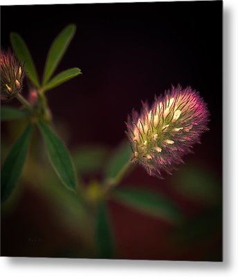 Below The Flower Line Metal Print by Bob Orsillo
