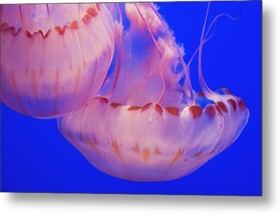 Below The Surface Metal Print by Jack Zulli