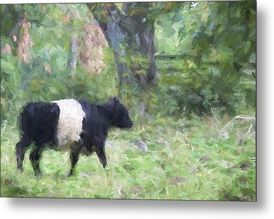 Belted Galloway Cow Painterly Effect Metal Print by Carol Leigh