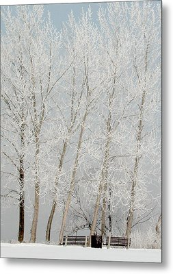 Benches And Hoar Frost Trees Metal Print by Rob Huntley