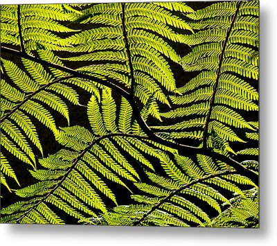 Bent Fern Metal Print