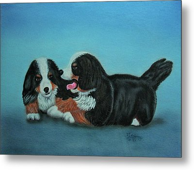 Bernese Mountain Puppies Metal Print