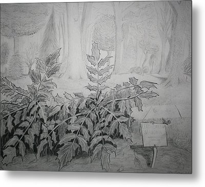 Metal Print featuring the drawing Bernheim Forest Plant by Stacy C Bottoms