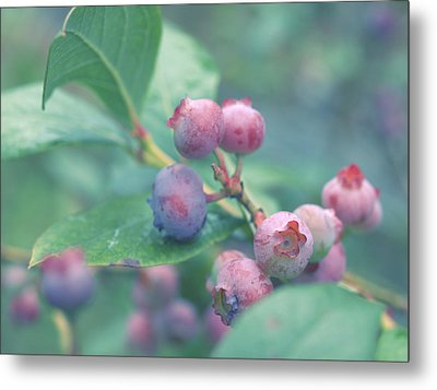 Berries For You Metal Print