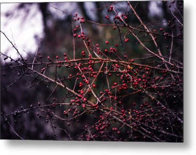 Berries  Metal Print by Heather L Wright