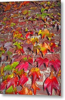 Berries Vines And Brick Metal Print by Barbara McDevitt