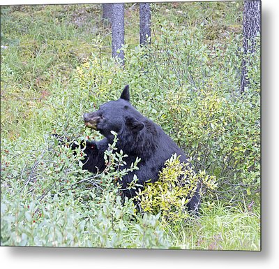 Berry Bear Metal Print by Wanda Krack