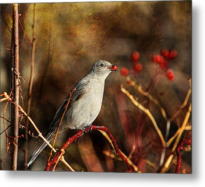 Berry Delighted Metal Print by Donna Kennedy
