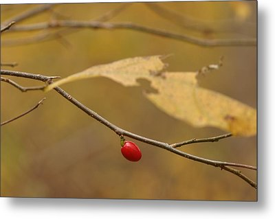 Berry Metal Print by Mark Russell