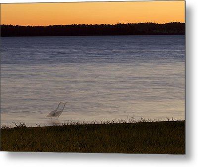 Beside Myself - Great Blue Heron At Sunset Metal Print by Jane Eleanor Nicholas