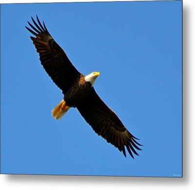 Best Bald Eagle On Blue Metal Print by Jeff at JSJ Photography