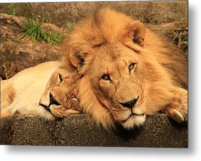 Best Friends For Life Metal Print