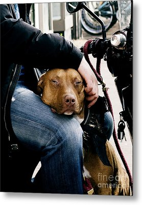 Best Pal Metal Print
