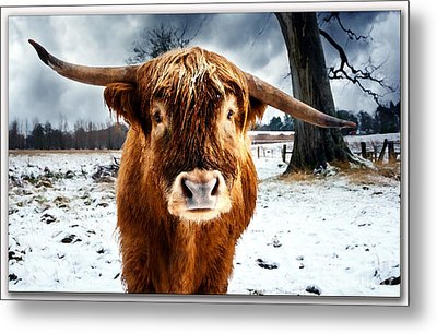 Betty The Cow Painting Metal Print