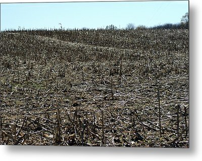 Between Sky And Field Metal Print by Joseph Yarbrough