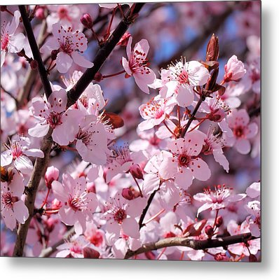 Bevy Of Blossoms Metal Print by Katherine White