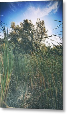 Beyond The Grass Metal Print by Laurie Search