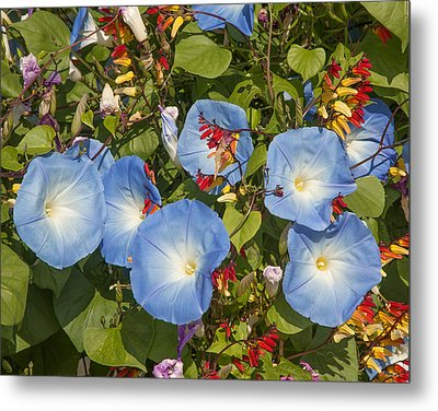 Bhubing Palace Gardens Morning Glory Dthcm0433 Metal Print by Gerry Gantt