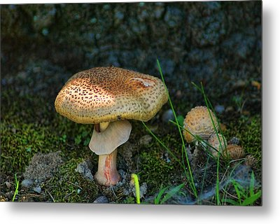 Big And Little Metal Print by Rick Friedle
