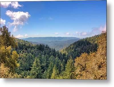 Metal Print featuring the photograph Big Basin Redwoods by Brent Durken