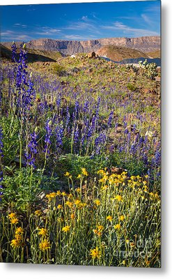 Big Bend Flowers Metal Print