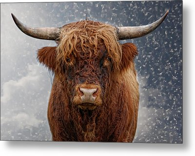 Big Bull Metal Print by Joachim G Pinkawa