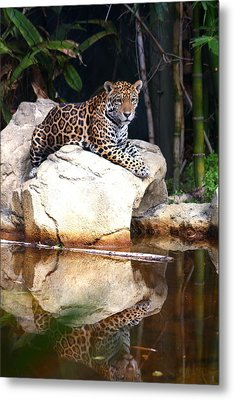 Big Cat Metal Print by Diane Merkle