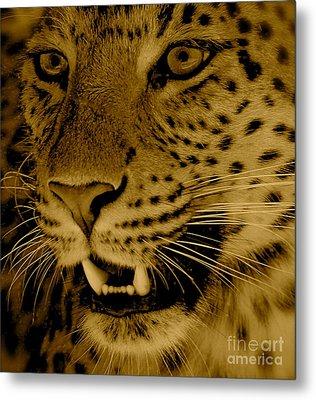 Big Cat In Sepia Metal Print