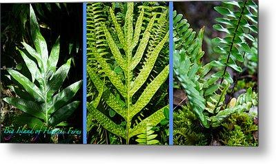 Big Island Of Hawaii Ferns Metal Print by Colleen Cannon