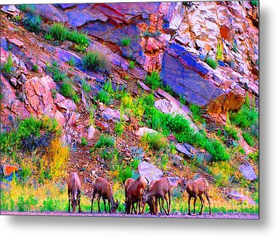 Metal Print featuring the photograph Bighorn Grazing Convention by Ann Johndro-Collins