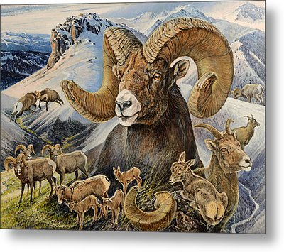 Bighorn Lifescape Metal Print by Steve Spencer