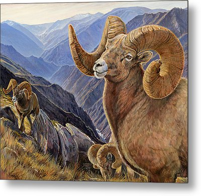 Metal Print featuring the painting Bighorn Trio by Steve Spencer