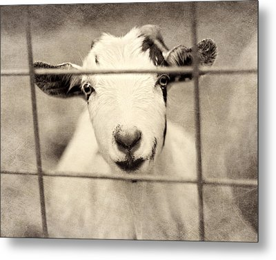 Billy G Metal Print by Amy Tyler