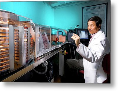 Biofuel Genetics Research Metal Print by Scott Bauer/us Department Of Agriculture
