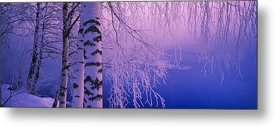 Birch Tree At A Riverside, Vuoksi Metal Print by Panoramic Images