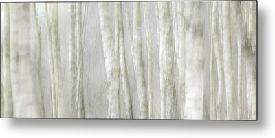 Birch Tree Impression No 1 Metal Print by Andy-Kim Moeller