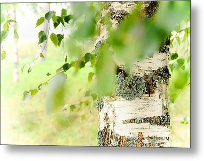 Birch Tree. The Soul Of Russian Nature Metal Print by Jenny Rainbow