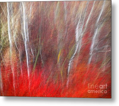 Birch Trees Abstract Metal Print by Tara Turner