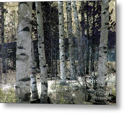 Birch Trees In Snow  Metal Print