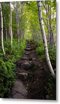 Birch Woods Hike Metal Print
