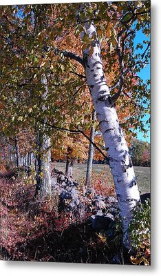 Metal Print featuring the photograph Birches by Mim White