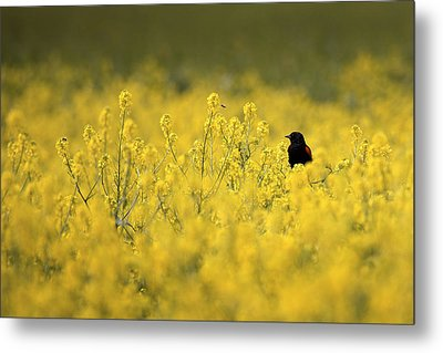 Metal Print featuring the photograph Bird And The Bees Mg_9150 by David Orias
