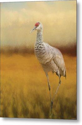 Bird Art - A Quiet Walk Metal Print by Jordan Blackstone